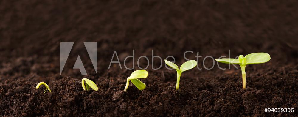 AdobeStock_94039306_Preview